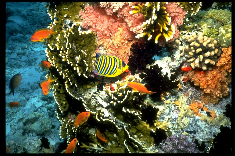 fish-colony-on-coral-head