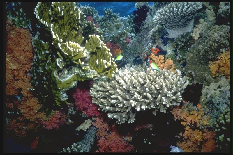 multi-level-coral-community